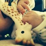 Marius die Giraffe