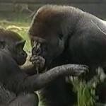 Warum Babys Affen wie wir sind