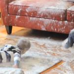 Falsche Mehlparty im Wohnzimmer